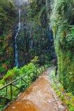 Percorso ai fontes di Levada das 25, isola del Madera, Portogallo della montagna Immagini Stock