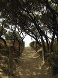 Percorso alla spiaggia Fotografie Stock Libere da Diritti