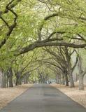 Percorso allineato albero fotografia stock