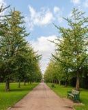 Percorso allineato albero attraverso il parco immagine stock libera da diritti