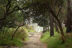 Percorso ambulante della foresta Fotografia Stock