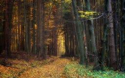 Percorso attraverso Autumn Trees nella foresta Immagine Stock