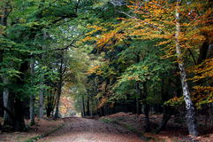 Percorso attraverso gli alberi di autunno nella nuova foresta Fotografie Stock