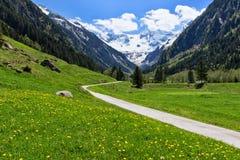 Percorso attraverso il paesaggio della montagna della molla vicino a Stillup, Austria, Tirolo Fotografia Stock