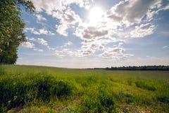 Percorso attraverso l'erba alta su un campo verde Fotografia Stock