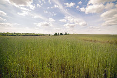 Percorso attraverso l'erba alta su un campo verde Fotografie Stock Libere da Diritti
