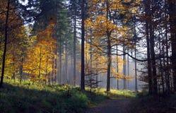Percorso attraverso la foresta Fotografie Stock