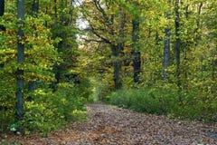Percorso attraverso la foresta della quercia Fotografia Stock