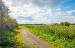 Percorso attraverso un campo al sole di estate Fotografia Stock