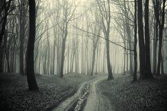 Percorso attraverso una foresta con gli alberi e la foschia neri fotografie stock