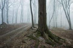 Percorso attraverso una foresta nebbiosa con un vecchio albero immagini stock