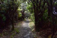 Percorso attraverso una foresta pluviale tropicale fertile fotografia stock