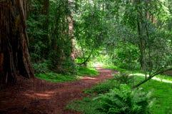 Percorso battuto che conduce intorno alla curvatura e nella foresta fotografie stock