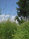Percorso battuto in erba unmowed alta Fotografia Stock