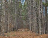 Percorso boscoso Fotografia Stock Libera da Diritti