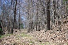 Percorso boscoso coperto in foglie Fotografia Stock