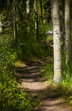 Percorso boscoso incantato Fotografie Stock Libere da Diritti