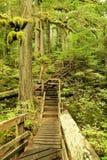 Percorso boscoso in un paraise verde Fotografia Stock Libera da Diritti