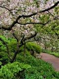 Percorso calmo in mezzo dei fiori di Crabapple fotografia stock libera da diritti