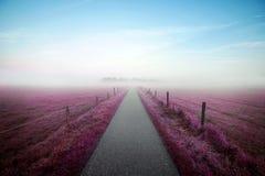 Percorso celeste attraverso un campo colorato della viola verso una foresta nebbiosa Fotografia Stock Libera da Diritti