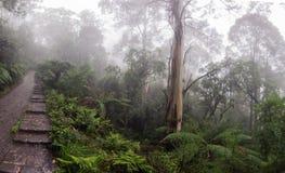 Percorso che conduce attraverso la nebbia della foresta pluviale fertile Fotografie Stock Libere da Diritti