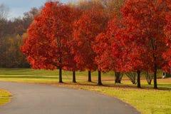 Percorso con Autumn Trees Immagini Stock