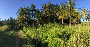 Percorso con i palmtrees in Anda Fotografia Stock Libera da Diritti