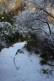 Percorso con neve Immagini Stock