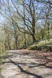 Percorso concreto attraverso il terreno boscoso fotografia stock