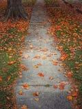 Percorso concreto di caduta con le foglie arancio Fotografia Stock