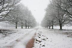 Percorso coperto da neve che piombo all'orizzonte Immagini Stock