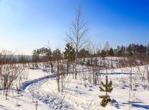 Percorso curvo nella neve nelle piantine della foresta Fotografie Stock Libere da Diritti