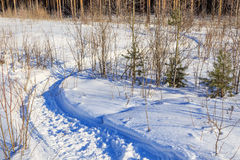 Percorso curvo nella neve nelle piantine della foresta Immagini Stock