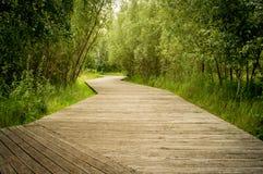 Percorso d'escursione di legno nel parco Immagini Stock Libere da Diritti