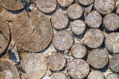 Percorso dagli sputi di un albero, fondo Immagine Stock