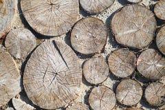 Percorso dagli sputi di un albero, fondo Fotografie Stock Libere da Diritti