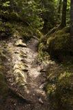 percorso dappled Fotografie Stock Libere da Diritti