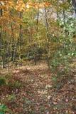 percorso del fogliame di autunno Immagini Stock