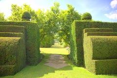 Percorso del giardino con gli arbusti del topiary Immagini Stock Libere da Diritti