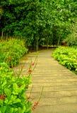 Percorso del giardino, giardini botanici di Singapore fotografia stock libera da diritti