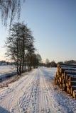 Percorso del paese di inverno con gli alberi Fotografia Stock