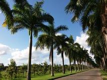 Percorso del palmtree Fotografia Stock
