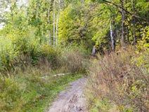 Percorso del passaggio pedonale attraverso la foresta ad estate Fondo, natura fotografia stock libera da diritti