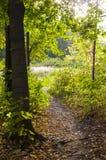 Percorso del passaggio pedonale attraverso la foresta ad estate Fondo, natura fotografia stock
