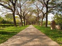 Percorso del passaggio pedonale di infinità del giardino Immagine Stock