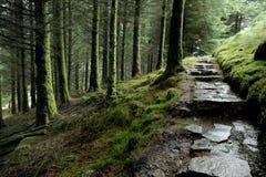 Percorso del terreno boscoso Fotografie Stock