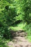 Percorso del terreno boscoso Fotografia Stock