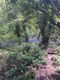 Percorso del terreno boscoso Immagini Stock