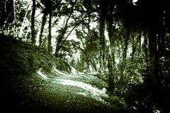 Percorso del terreno boscoso Immagini Stock Libere da Diritti