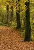 Percorso del terreno boscoso in autunno Immagini Stock